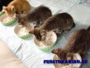 Каши для кошек. Рецепты