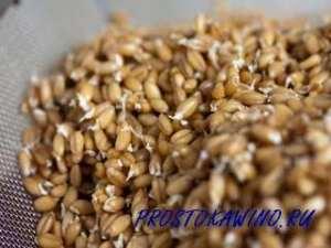 Польза пророщенной пшеницы для организма